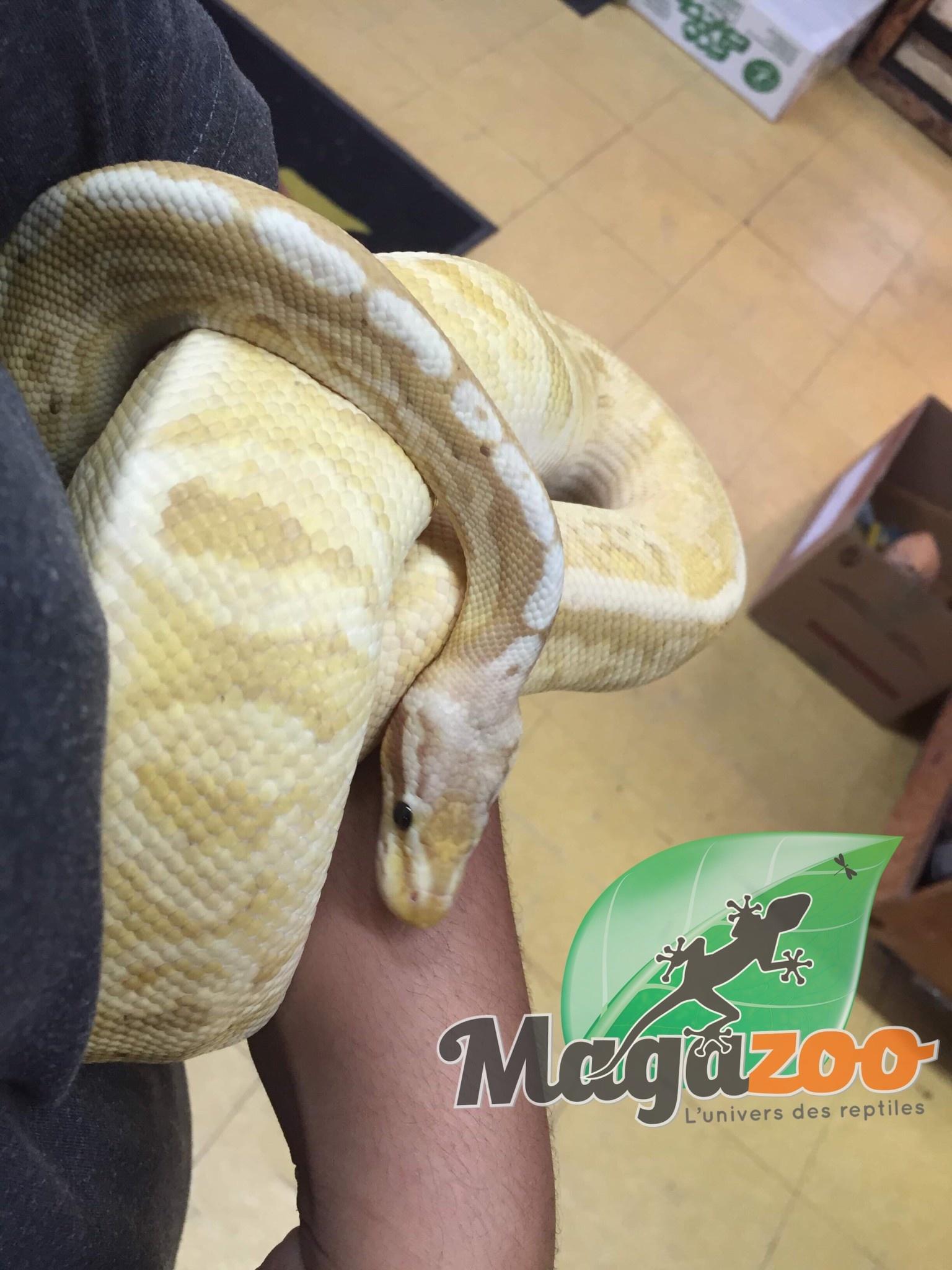 Magazoo Python Royal Banana super Pastel Mâle