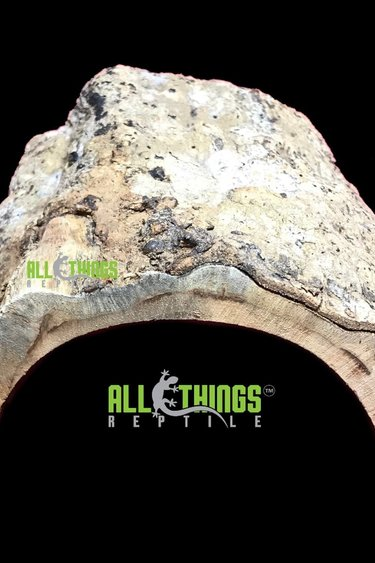 All things reptile Demi-bûche naturelle - Natural Half Log