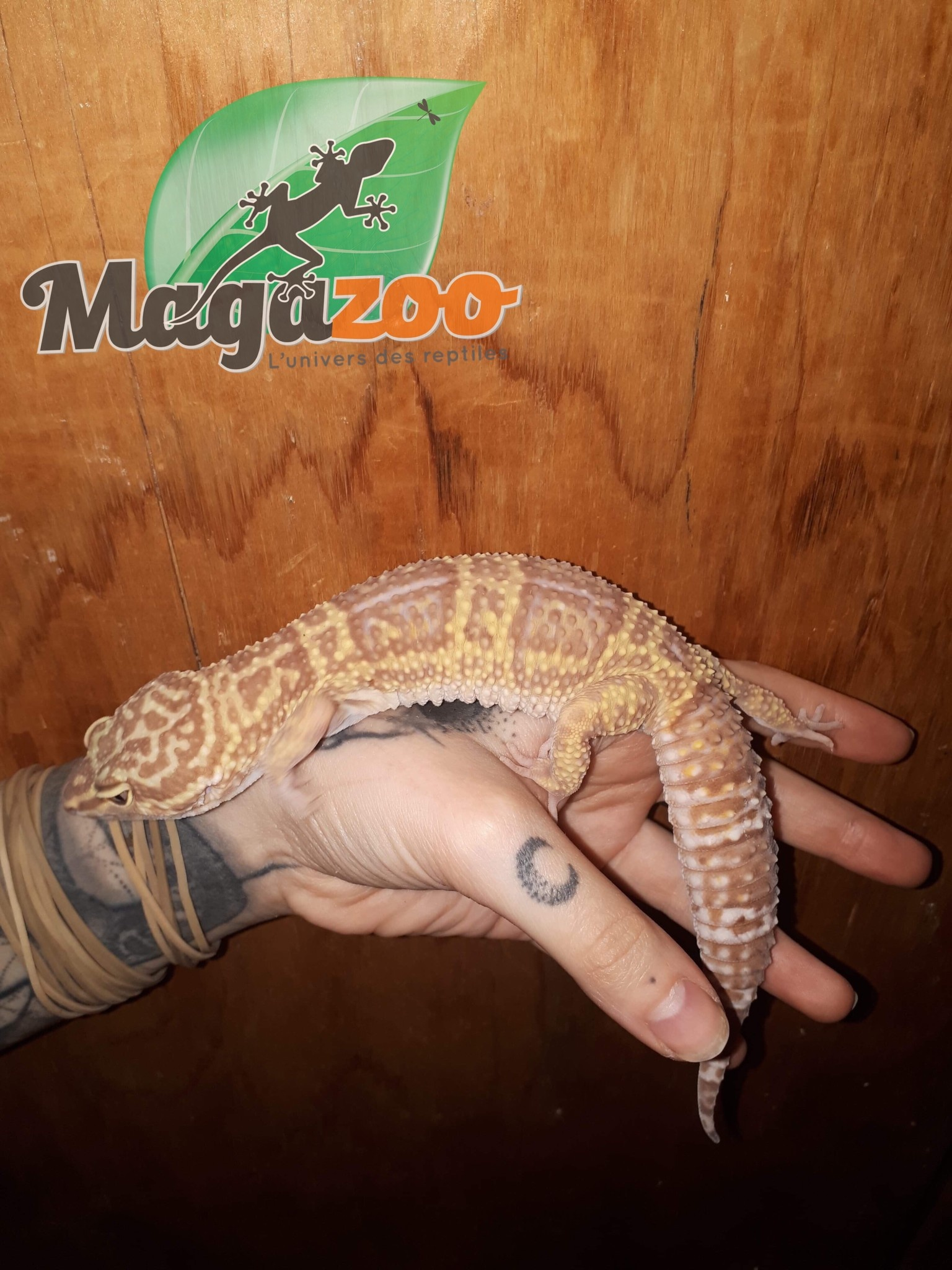 Magazoo Gecko Léopard Mack Snow Tremper Albino Femelle