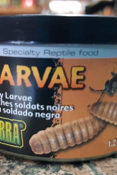 Exoterra Nourriture en conserve larves de mouche soldat noir 34 gr - Black Soldier Fly Larvae Canned Food