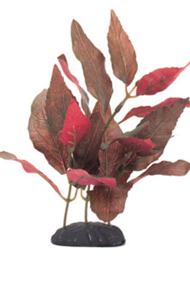 Marina Alternanthera cardinalis EcoScaper Marina en soie, 20 cm (8 po)