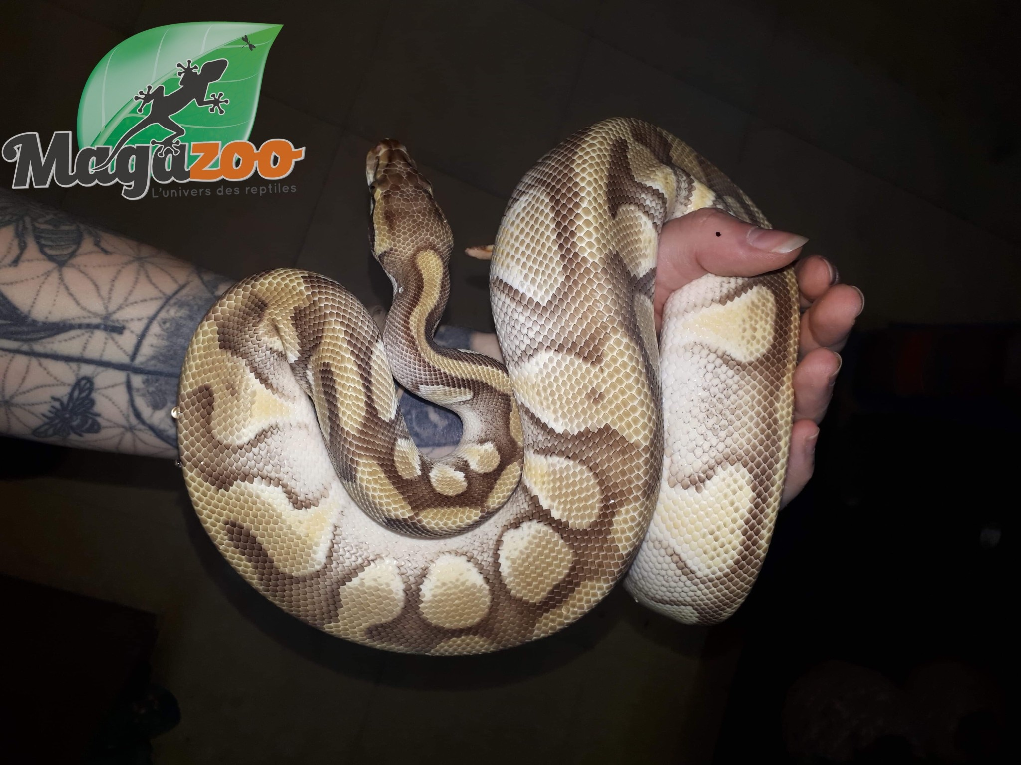 Magazoo Python royal Butter mâle