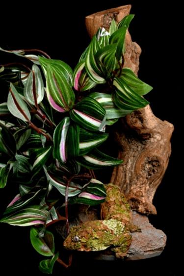 Pet-Tekk Plante tropicale sur socle en pierre avec bois usé - Tropical Plant on Stone Base with Worn Wood