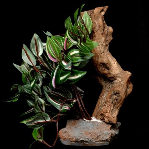 Magazoo Plante tropicale sur socle en pierre avec bois usé - Tropical Plant on Stone Base with Worn Wood