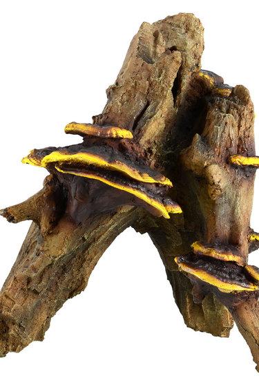 Treasures underwater Racine avec champignons X-Large - Root with Mushroom