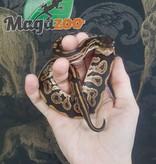 Magazoo Python royal black pastel HET Piebald Mâle