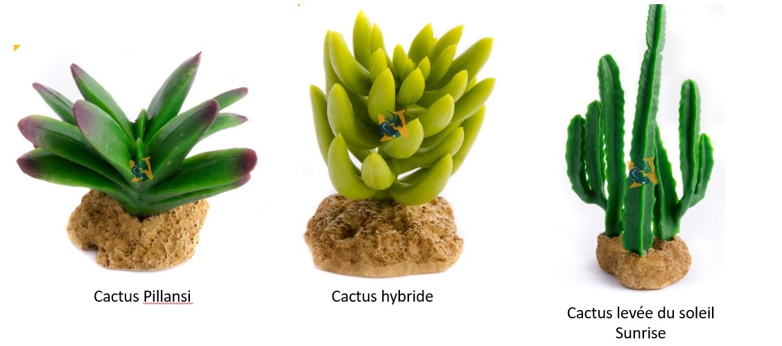 Aqua Globe Cactus Aqua Globe