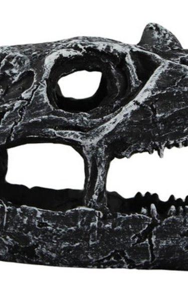 Pangea Grotte crâne de dinosaure - Dinosaur Skull Cave