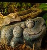 Exoterra Bol à eau Aztèque en forme de grenouille