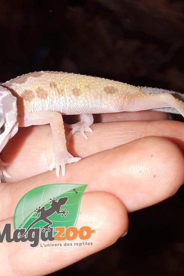 Magazoo Gecko leopard Patternless Murphy Line Bébé