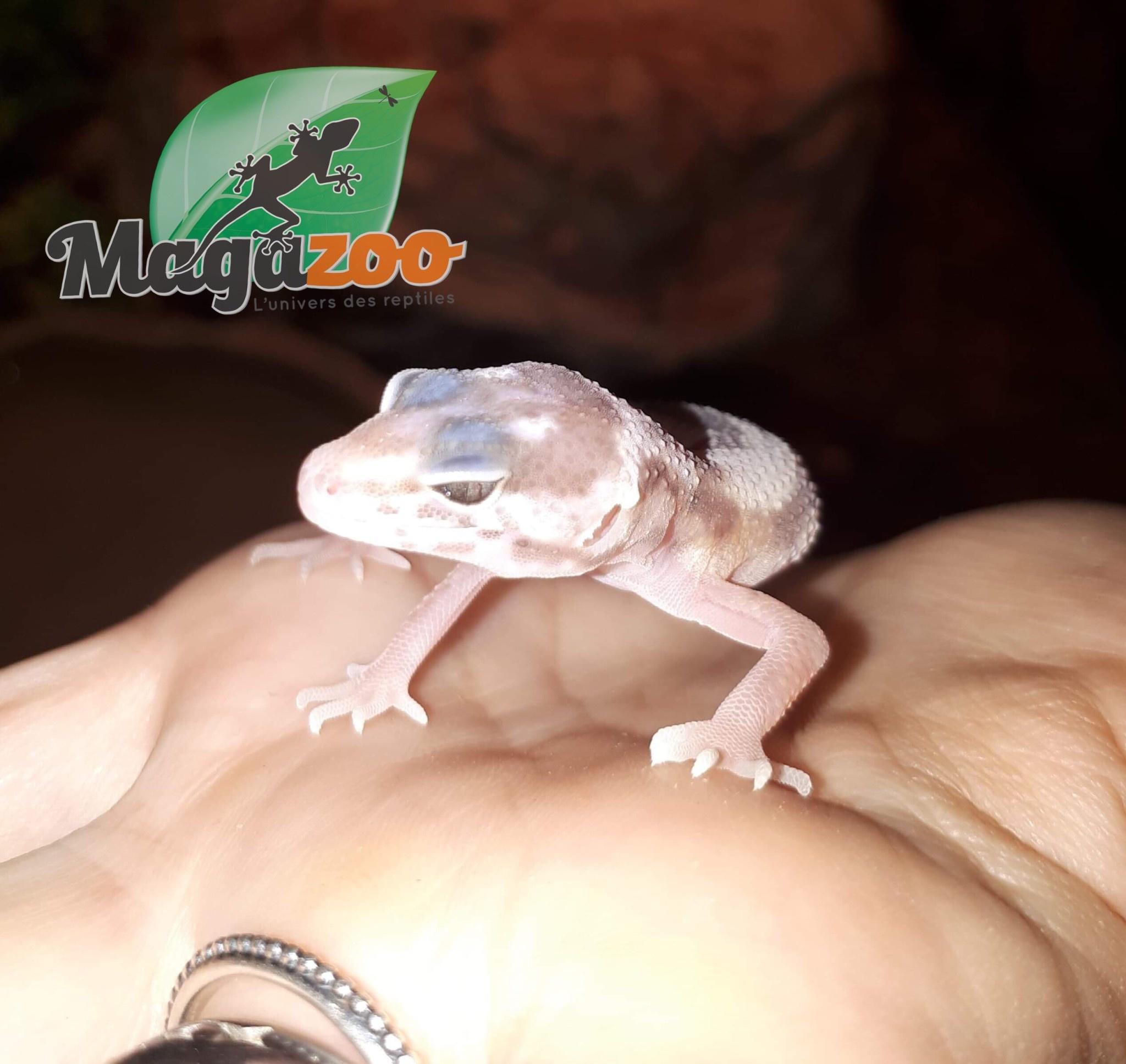 Magazoo Gecko léopard Mack snow blizzard Bébé