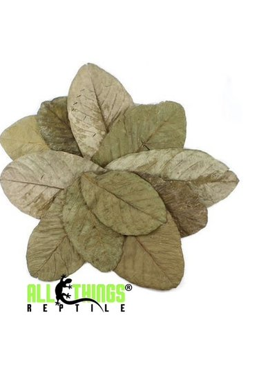 All things reptile Feuilles de goyave séchées Grade A pq de 10 - Guava Leaves Dried