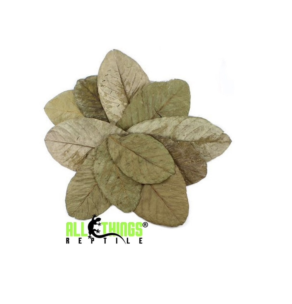All things reptile Feuilles de goyave séchées Grade A pq de 10 - Guava Leaves Dried