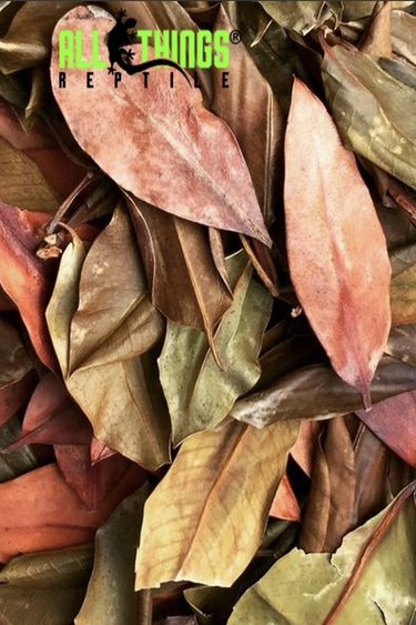 All things reptile Feuilles de mangrove séchées Grade A pq de 10 -  Mangrove Leaves Dried