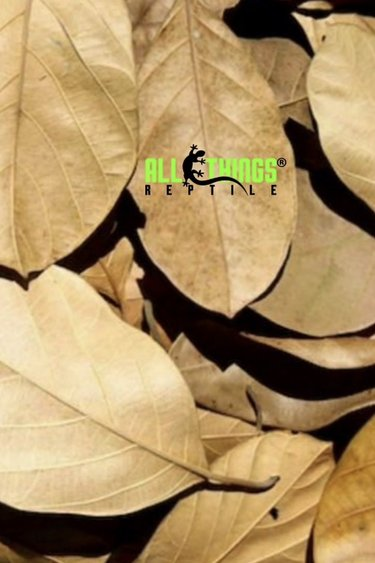 All things reptile Feuilles de Jackfruit séchées Grade A pq de 10 - Jackfruit Leaves