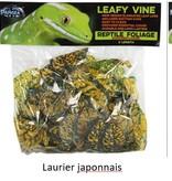 Pangea Vigne feuillue Pangea - Leafy vine 6 pieds