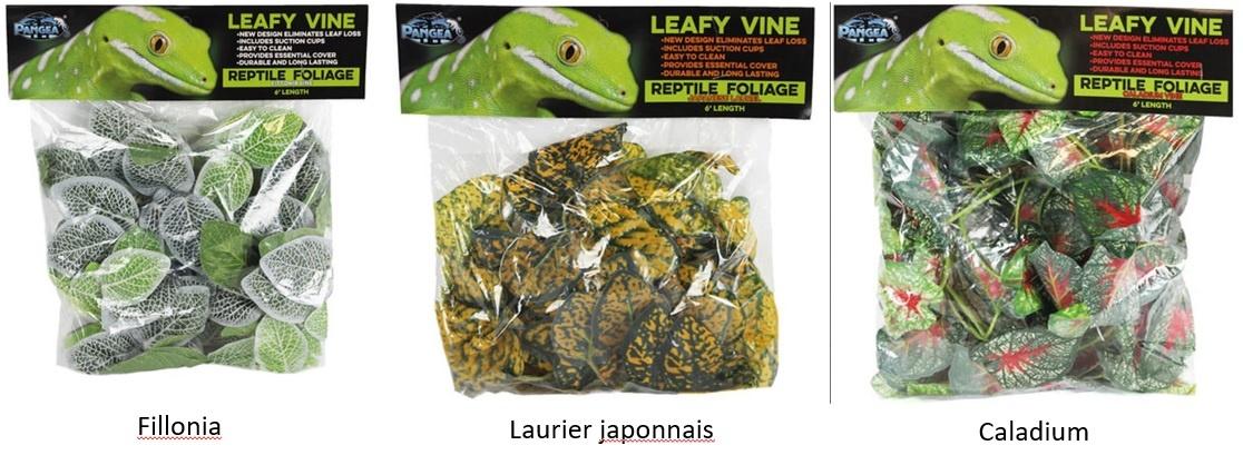 Pangea Vigne feuillue Pangea - Leafy vine