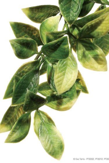 Exoterra Plante mandarin
