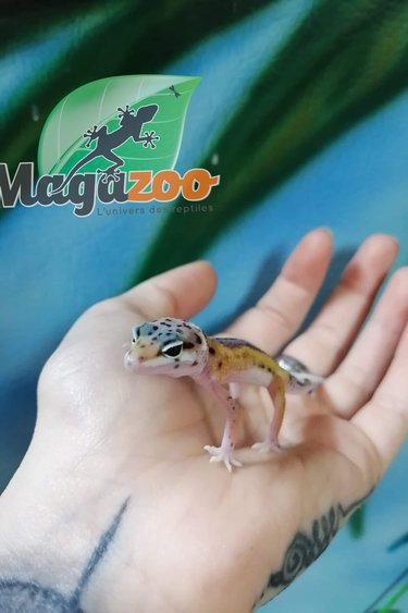 Magazoo Gecko Léopard Reverse Stripe Bébé