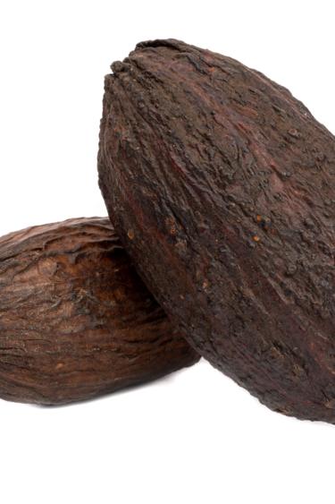 "NewCal Pets Gousses de coco 5-7 po - Cocoa Pod 5-7"""