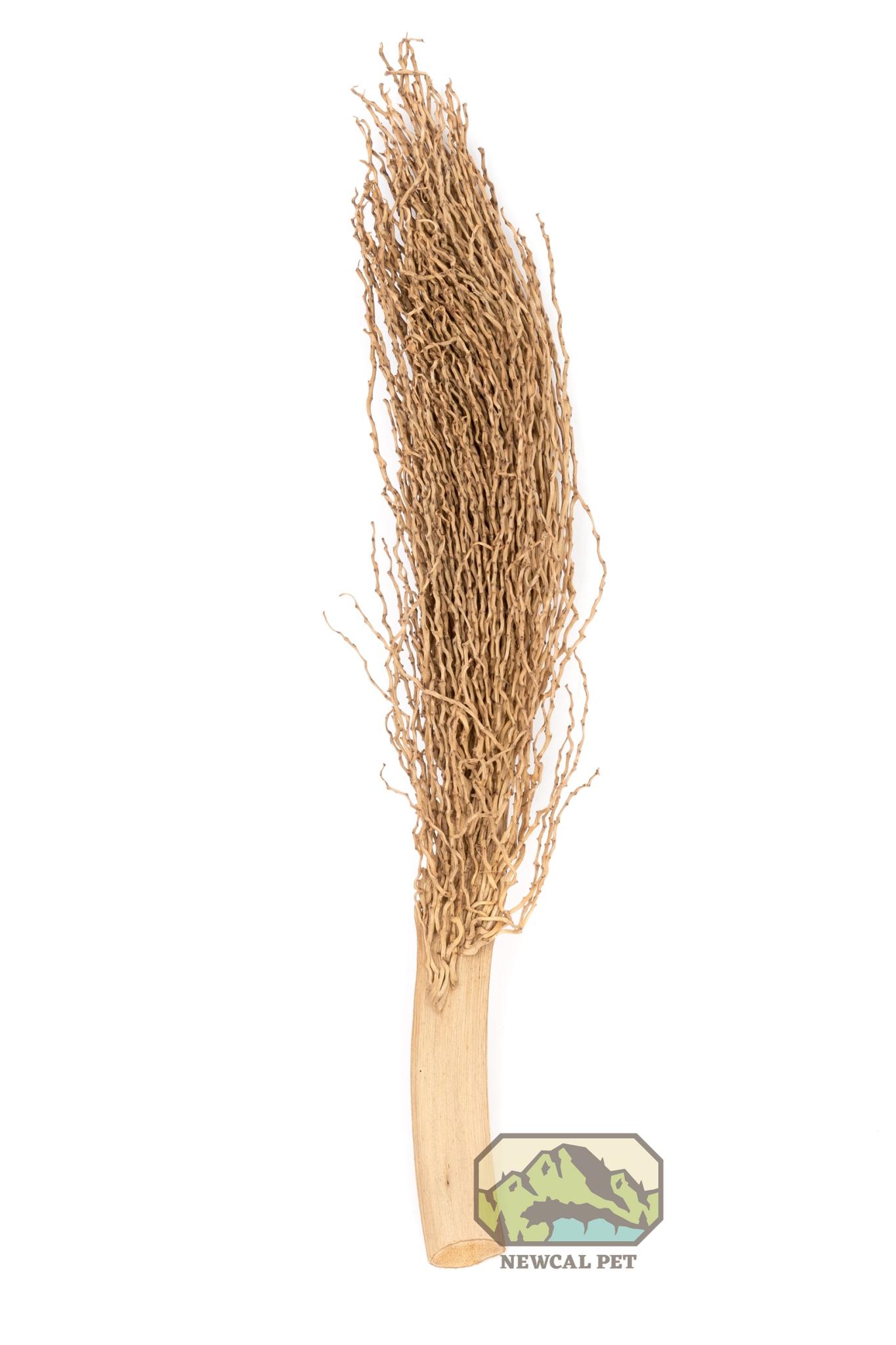 "NewCal Pets Branche de rameau séché 12 po - Palm Torch 12"""