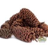 NewCal Pets Cônes d'aulne 1 oz - Alder Cones