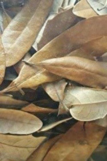 NewCal Pets Feuilles de chêne vivante (litière) - Live Oak Leaves (Leaf Litter)