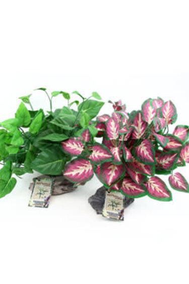 Pet-Tekk Plante tropical -Tropical Plant on Stone Base