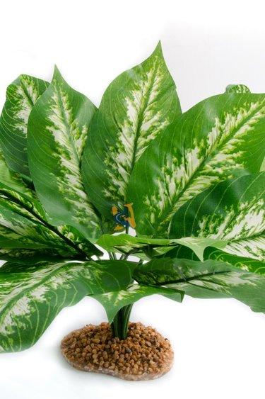 Aqua Globe Plante en soie Costatum - Costatum Silk Plant