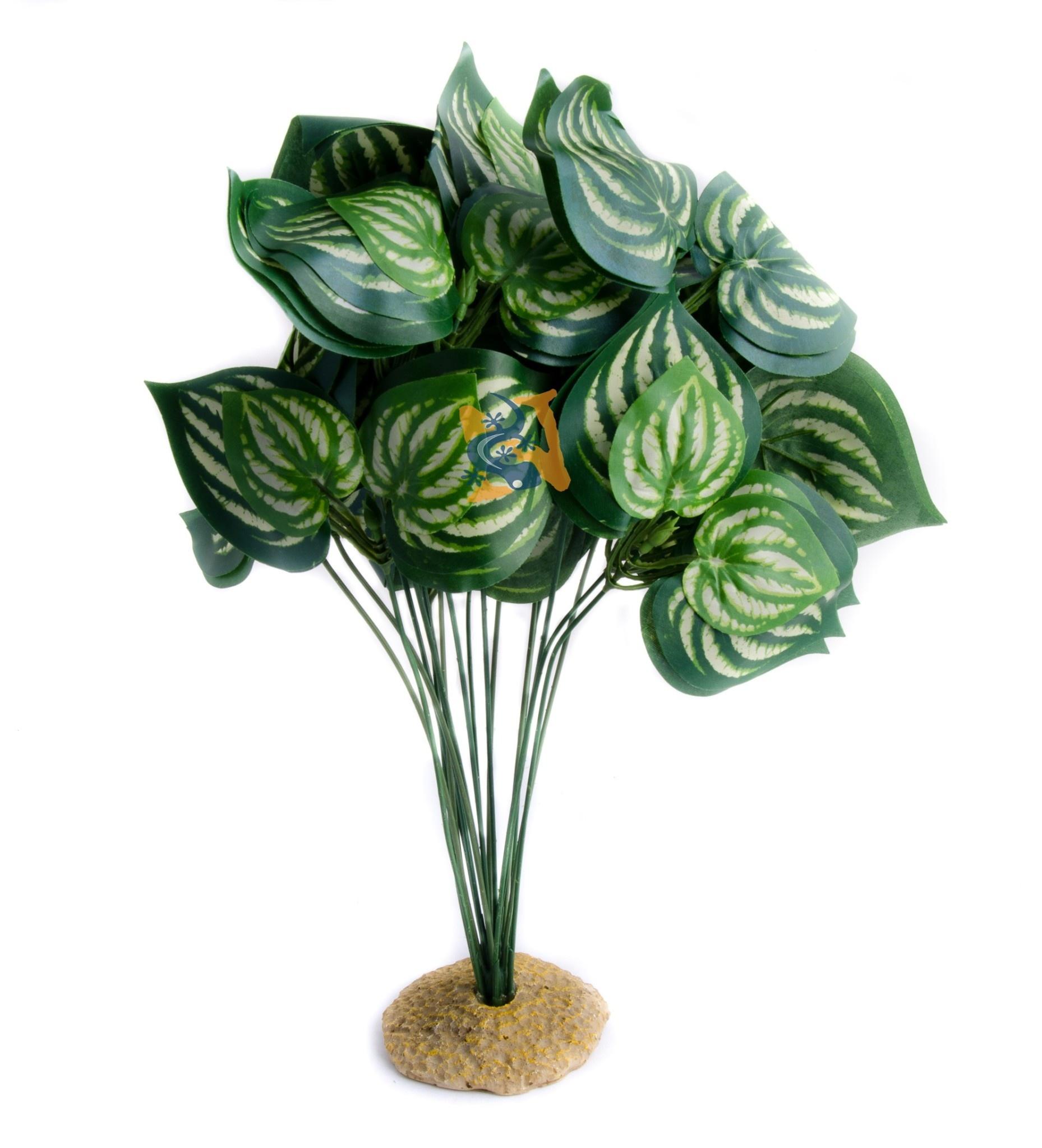 Aqua Globe Plante en soie melon 8 po de haut - Melon Silk Plant
