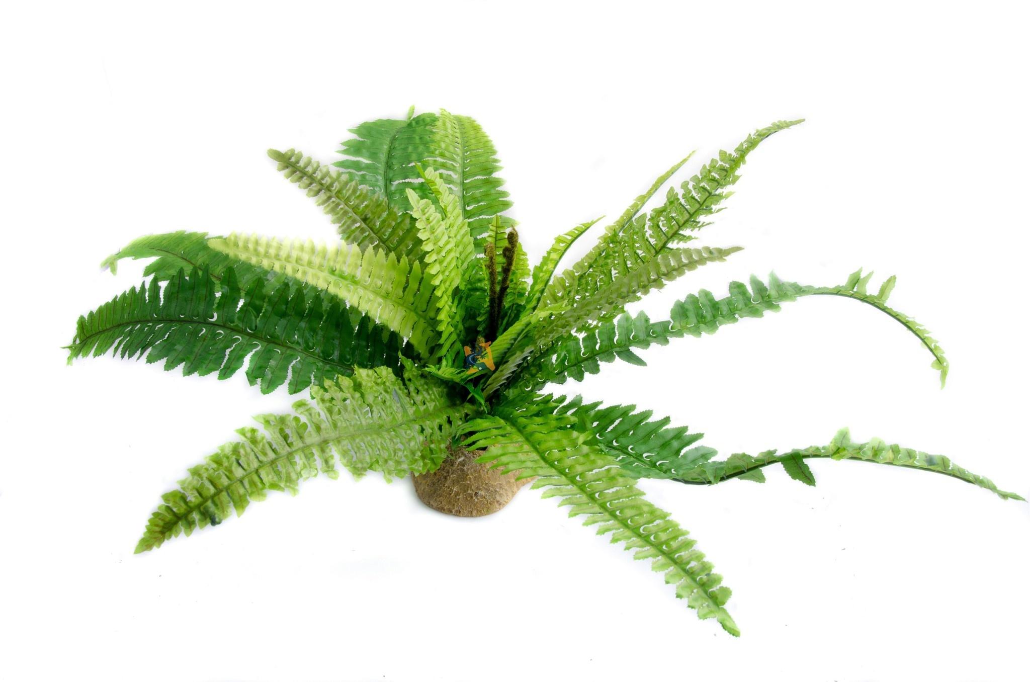 Aqua Globe Feuilles de fougère - Fern leaf