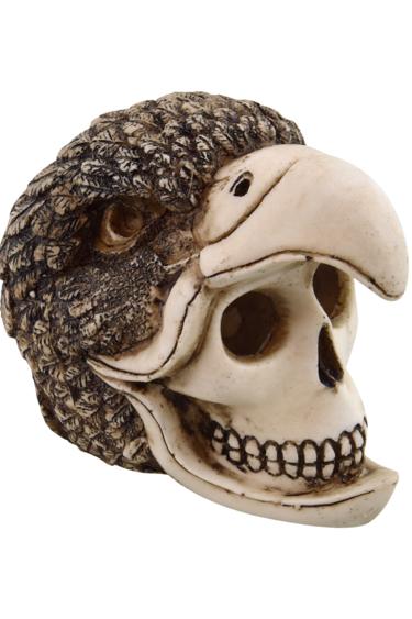 Treasures underwater Crâne d'oiseau-humain - Birdman Skull