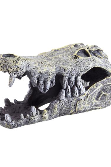 Treasures underwater Crâne de crocodile - Crocodile Skull