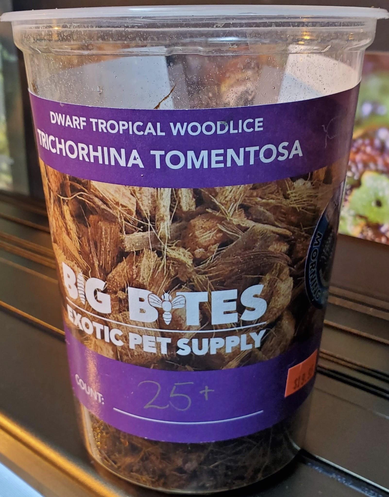 Big Bites Culture de Cloporte Isopod Wood Lice 25+ Pack