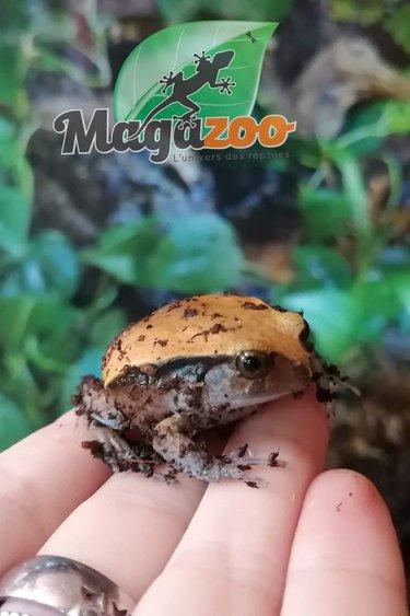 Magazoo Grenouille tomate bébé
