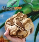 Magazoo Python Royal Butter Enchi Het Enhancer Mâle
