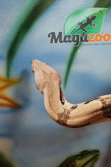 Magazoo Boa Constricteur Pastel Juvénile