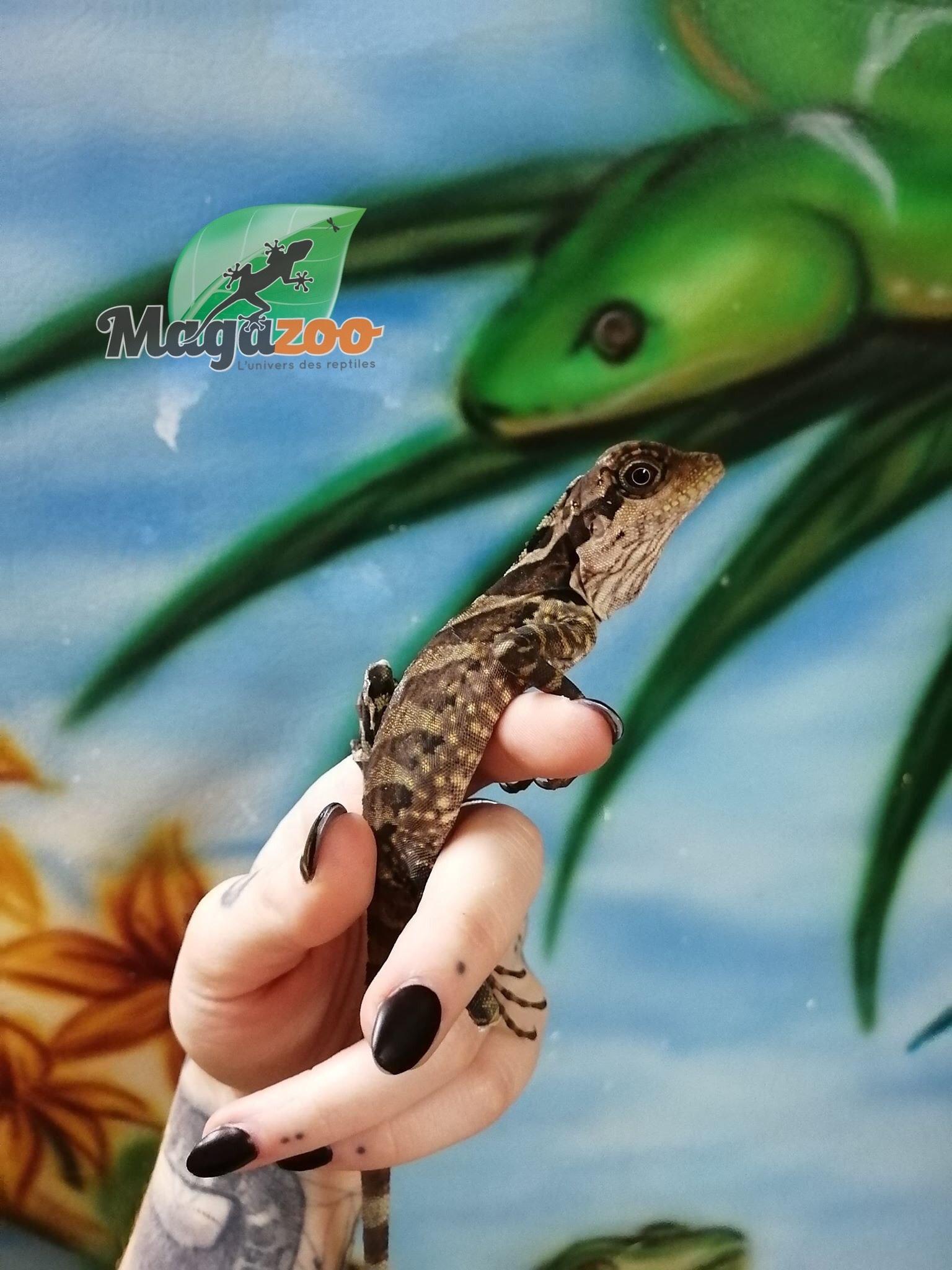 Magazoo Dragon géant de forêt Bébé femelle