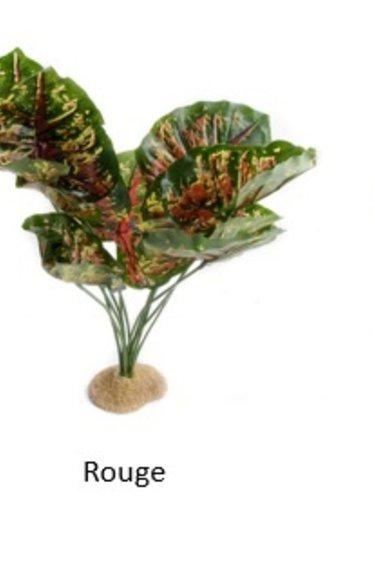 Aqua Globe Plante en soie Casia - Casia silk plant