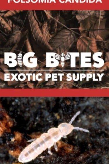 Big Bites Culture  Collembole Blanc (Folsomia  Candida) /  Springtails Standard White