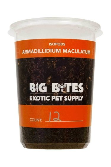 Big Bites Culture  de Cloporte Isopod armadillidium maculatum 12 pack