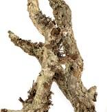 NewCal Pets Branches écorce  assorties -Cork Branches Bulk