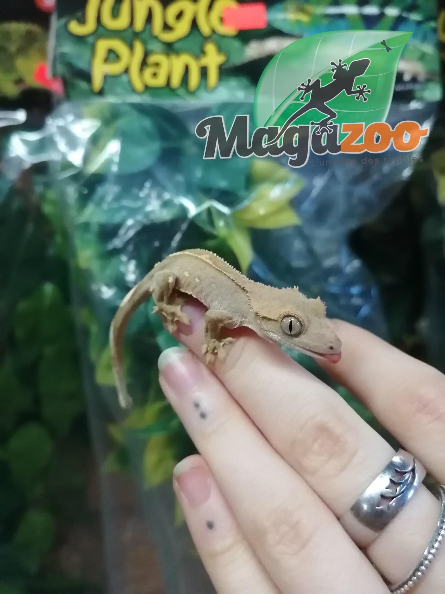 Magazoo Gecko à Crête Pinstripe Bébé