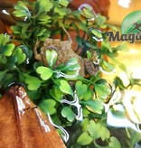 Magazoo Crapaud Pipa Pipa