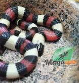 Magazoo Serpent Laitier Pueblan Bébé