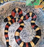 Magazoo Serpent laitier pueblan (abricot)