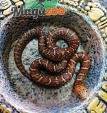 Magazoo Serpent Roi   (Hypo Flame)