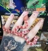 Magazoo Serpent des blés Reverse Okeetee (Femelle)