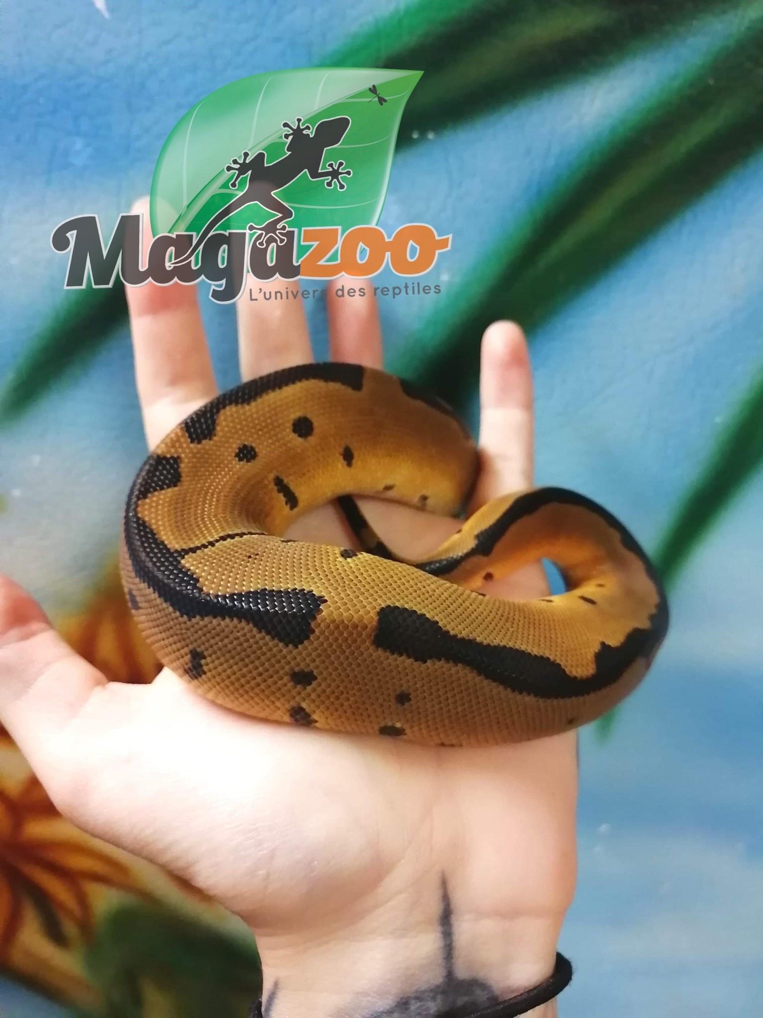 Magazoo Python Royal Blade Clown Bébé Mâle