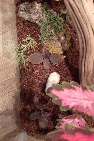Magazoo terrarium 16x8x20 planté